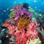 Sepuluh Lokasi Wisata Terpopuler di Indonesia