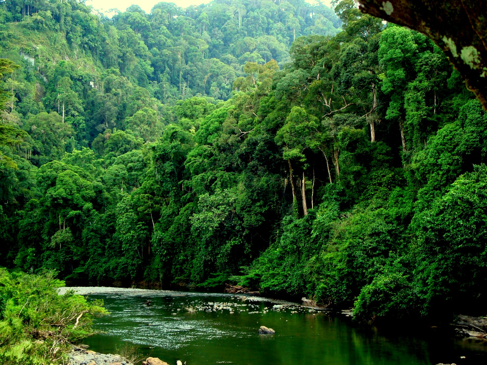 The-Wild-and-Natural-Ecosystem-Tanjung-Puting-National-Park